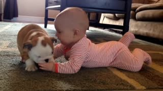 beautiful Baby with dog