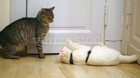 funny cat pet 1