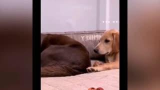 dog farts surprise