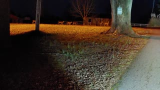 Country Living After Dark and at It's Finest for Local Deer Population