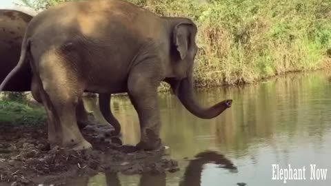 What The Hell is This Elephant Doing
