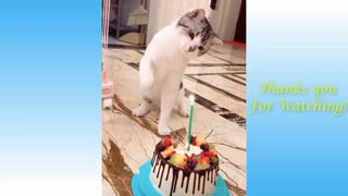 Awesome Funniest Animal Videos