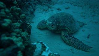 Turtle in the underwater world