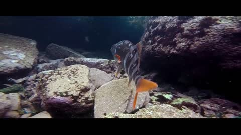 Diving and Play with Animal Under Water