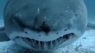 Scary things under water.....
