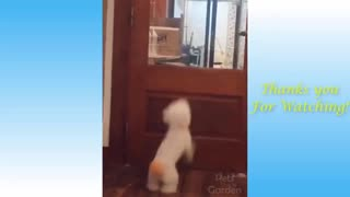 Dog Jumps To See What's Happening Outside