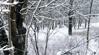 Winter wonderland (short)