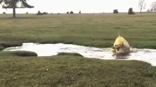 Crazy Water-Loving Dog Can't Stop Spinning In Circles