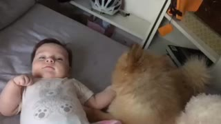 Cute puppy loves his baby sister