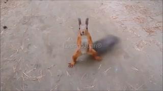 Funny animals short video funny video