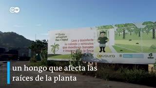 La lucha de las bananeras en Colombia