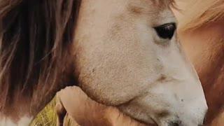 Horses beatiful