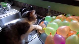 cat v/s balloons