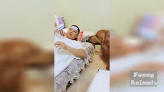 Funny Animals House Video