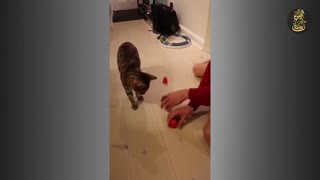 Cat Plays Shell Game