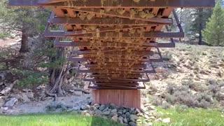 Swallows Feed Babies Under a Bridge
