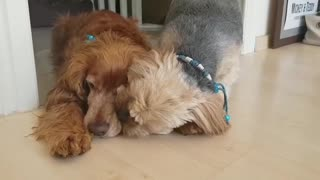 Doggy best friends share a very special bond