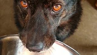 Dog holding dish