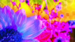 flowers aura