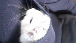 Sweet funny Hamster
