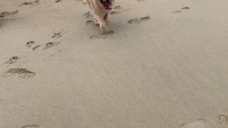Beach Life with NoNo Bear