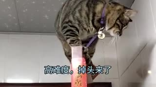 Funny cats 2021 | Cats compilation |