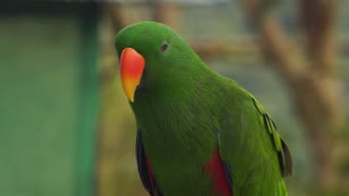 Green Parrot with Orange Beak