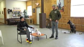 Training a nervous rescue dog