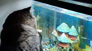 Rocky plays with fish