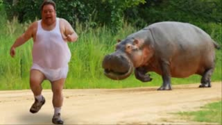 Animals Chasing People 2021