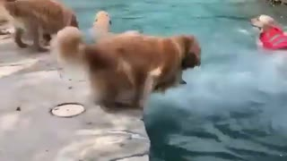 Dogs Pool party 🐶❤️