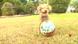 «Es un milagro de Navidad»- Perrito que llevaba 3 años perdido logra reencontrarse con su familia
