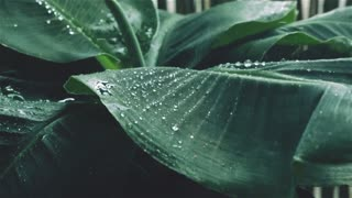 Rainfall With Relaxing Music