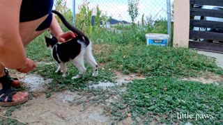 Meeting new and cute cats on our trip trough farm fields