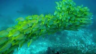 fish are very beautiful