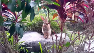 brawn rabbit eating leaves