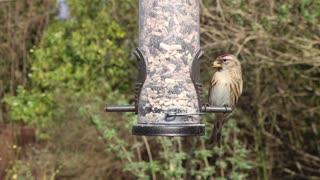 Lovely birds eat