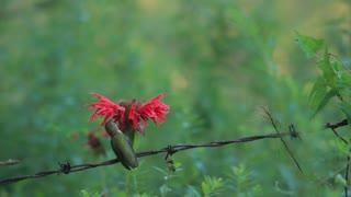 Beautiful bird in nature
