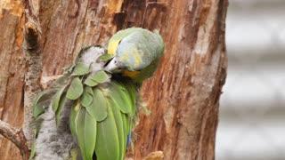 Bird parrot clean AVE green