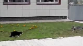 cat vs dog face a face
