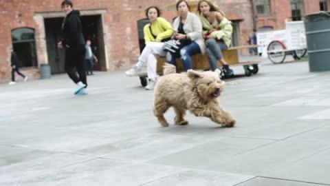 Puppy Dog Playing