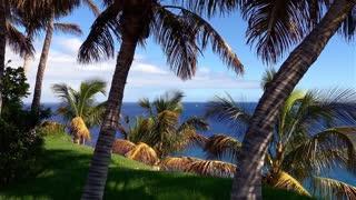 Ocean Trees