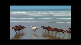 Horses running along the beach