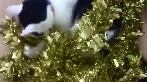 Cat stole the christmas tree garland
