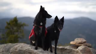 Two people, two dogs, and two weeks camping across the state of Colorado