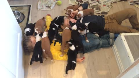 Burried in puppies