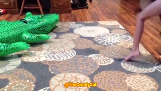 Funny Cats Video When cats are Scared | Fyyn Cat & dog