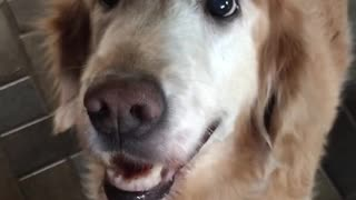 Dog react to cancer results
