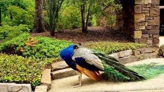 Some wonderful nature animals