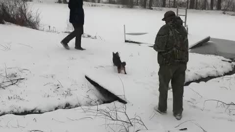 Dog Runs Comically in Snow While Wearing Booties